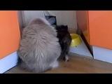 Видео про котяток 1